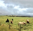 A landscape photo of a horse farm located in the Reykjanes Peninsula in Iceland.