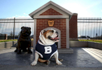 Indianapolis, IN - April 2, 2015: Butler University mascot Butler Blue III \{quote}Trip\{quote} at a memorial and final resting place of two previous Butler mascot bulldogs Blue, and Blue II next to Hinkle Fieldhouse on the Butler Campus in Indianapolis, Indiana. Future mascots will have their remains placed inside the memorial and a plaque placed in their honor. CREDIT: Chris Bergin for The New York Times