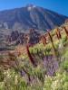 06_TF-001189-D_Parque_Nacional_del_Teide