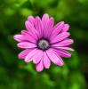 Flores-_0011