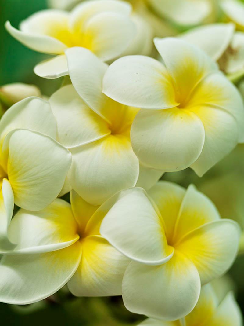 Flores-_0017