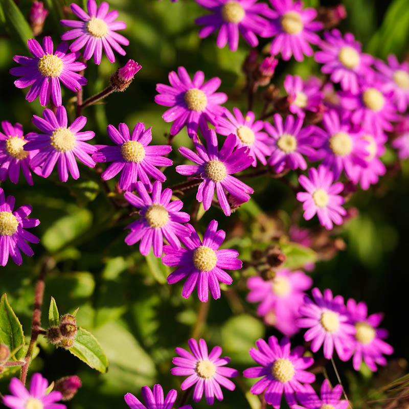 Flores_y_Liquenes_Teno_0010