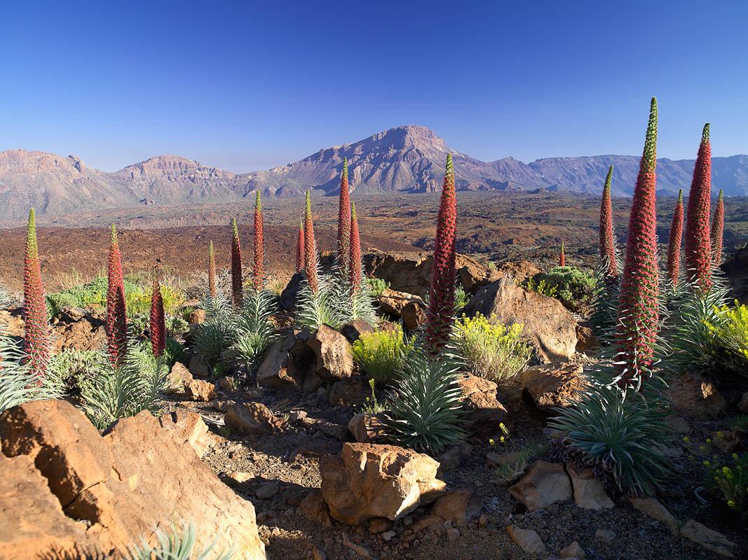 TF-01149-D_Parque_Nacional_Teide_2