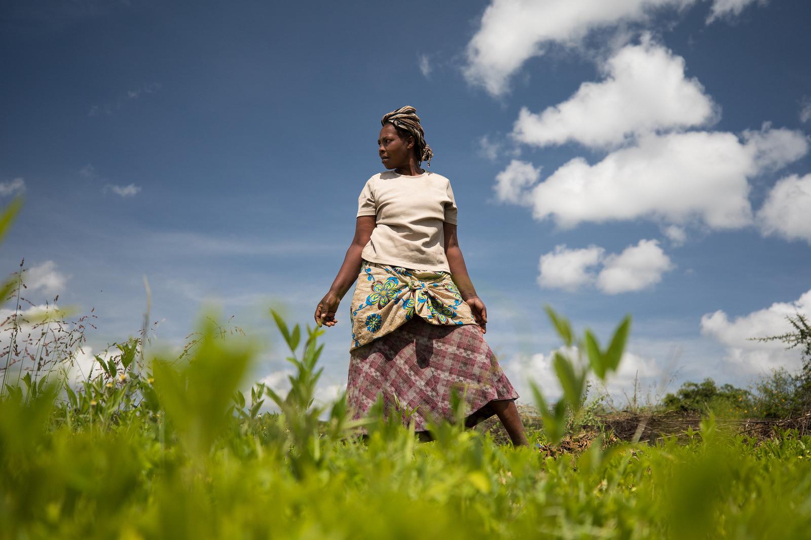 Zimbabwe farming