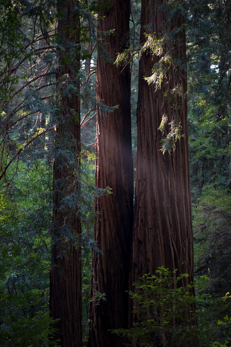 Muir Woods, USA