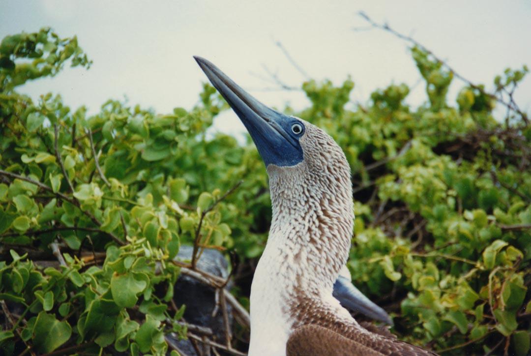 Española Island, Galapagos - Ecuador