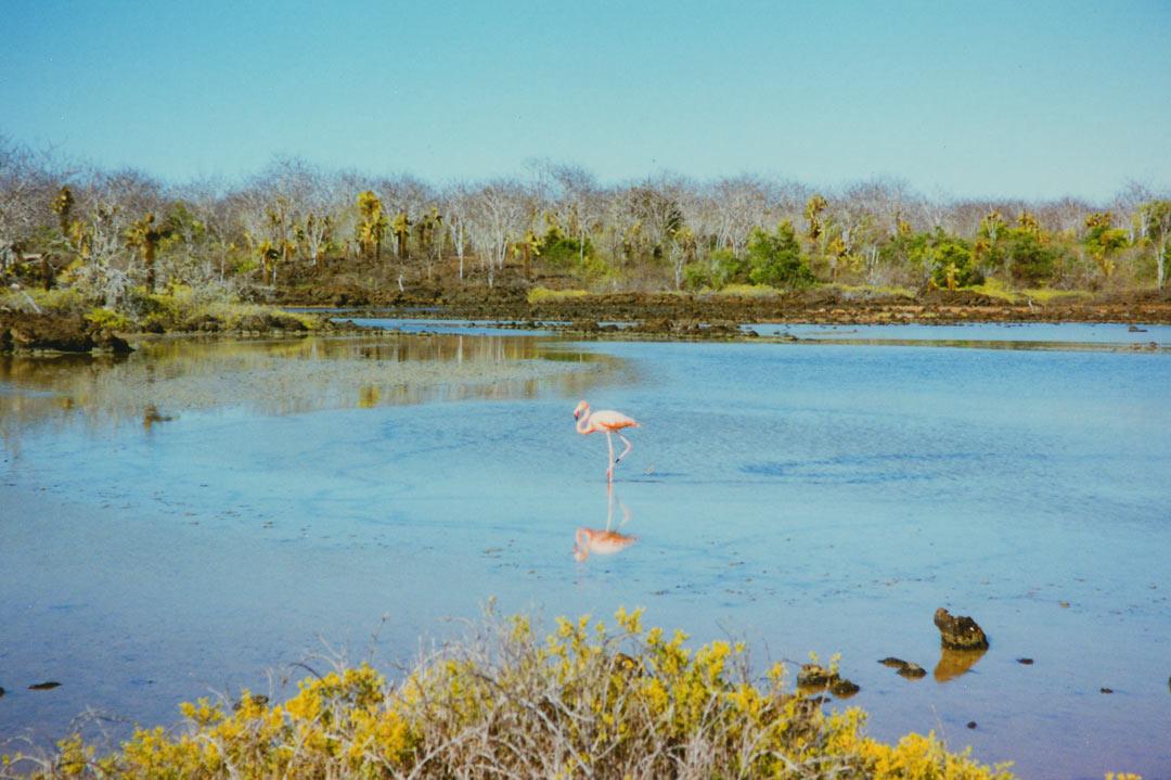Santa Cruz Island, Galápagos - Ecuador