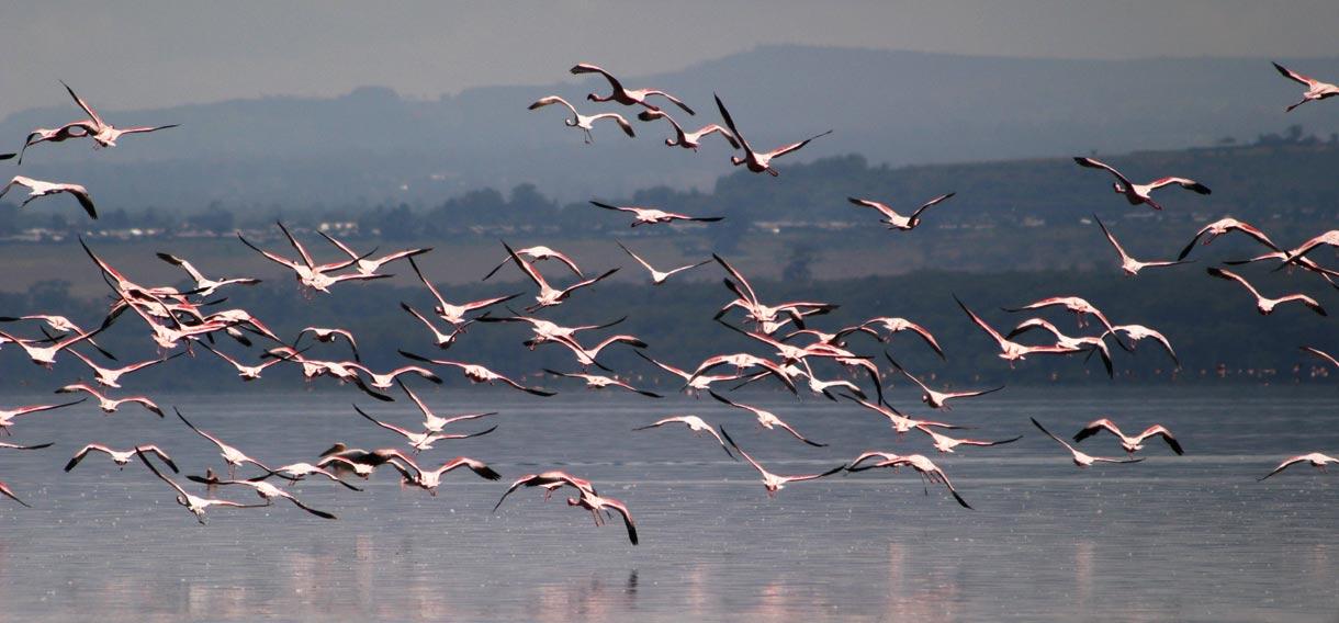 Lake Nakuru - Kenya