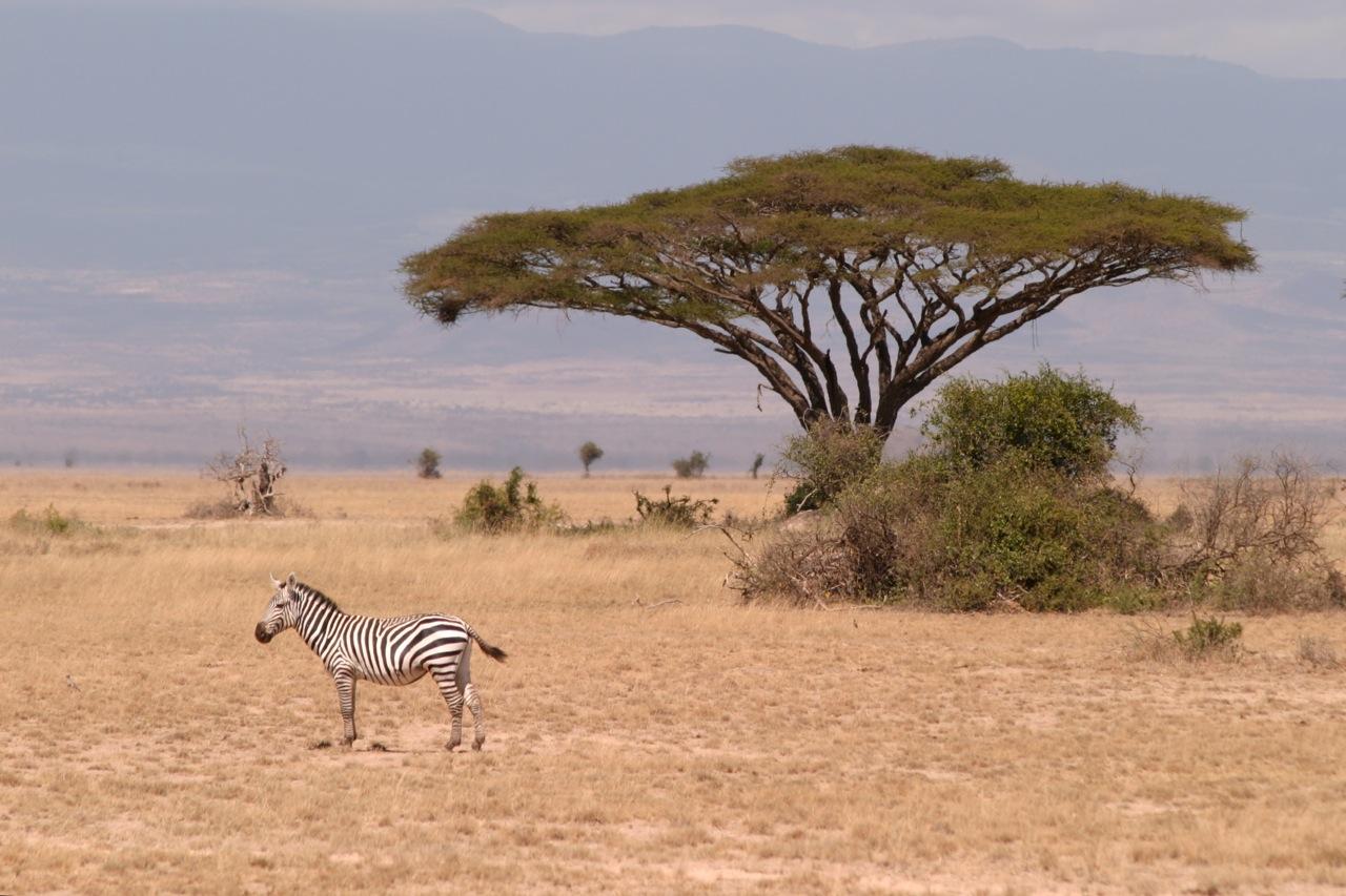 Amboseli National Park - Southern Kenya