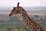 Central Kenya