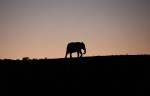 Addo Elephant Park is one of 19 of the countries national parks. Near Port Elizabeth, South Africa