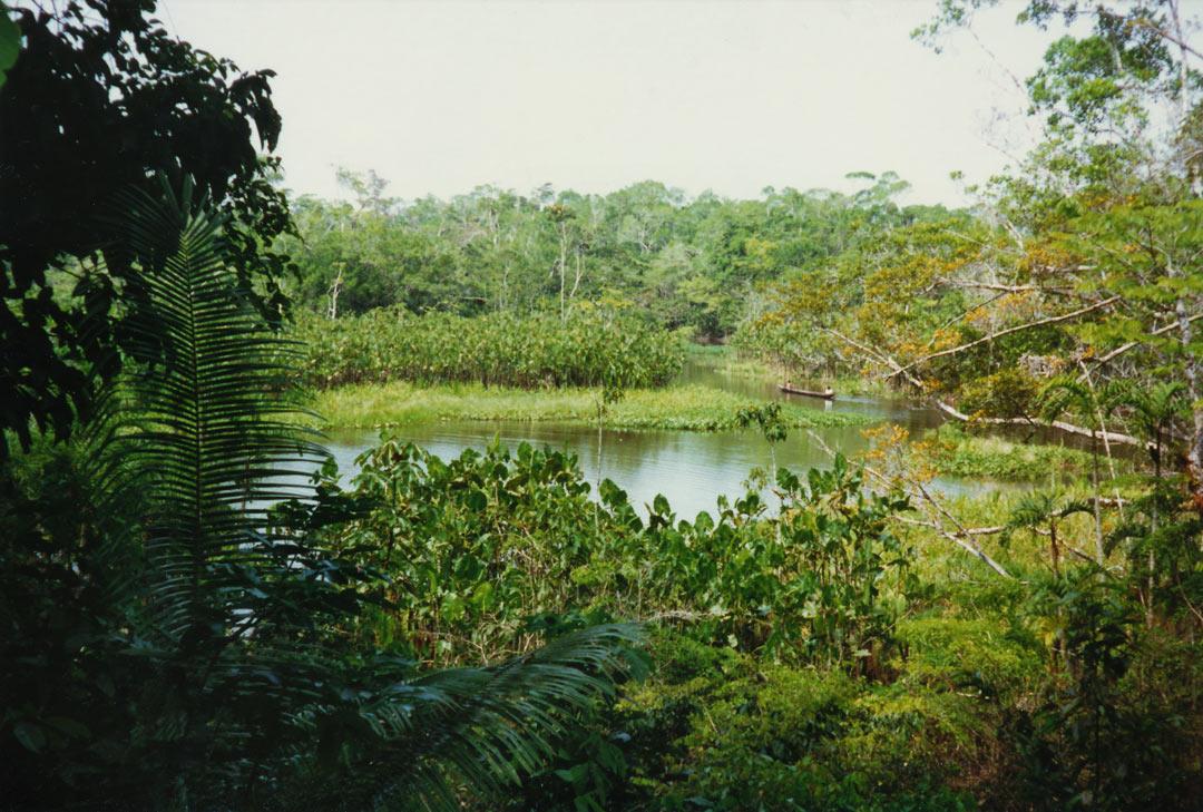 Western Amazon - Ecuador