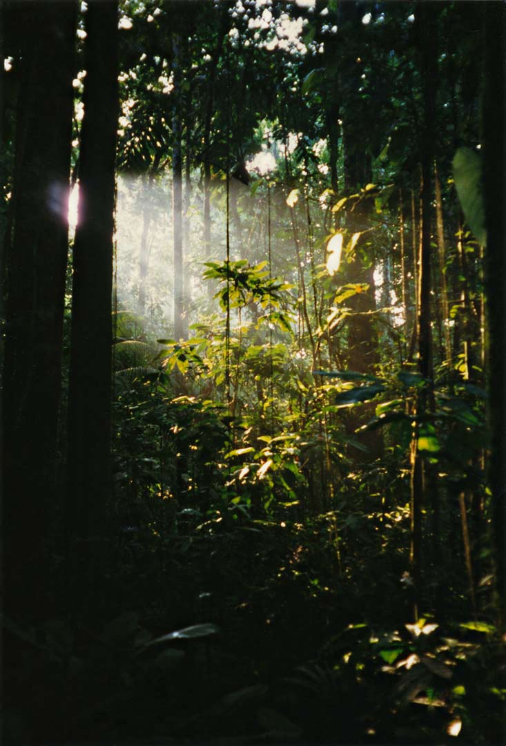 A shaft of light enters the jungle. Western Amazon - Ecuador