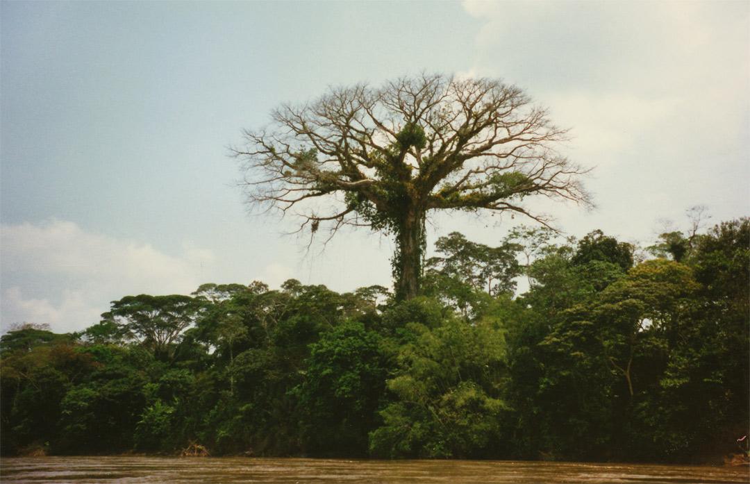 Napo river - Western Amazon - Ecuador