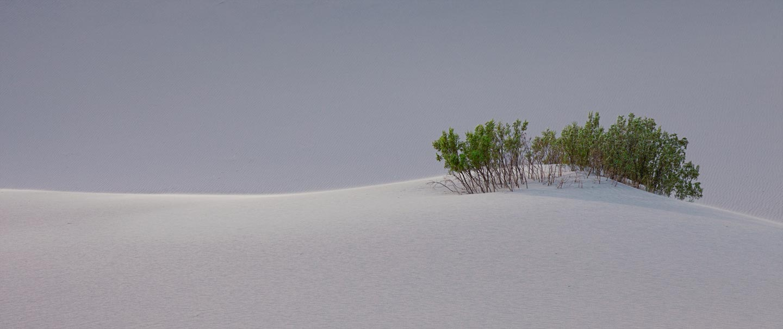 treesand
