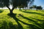20121108_Caponetti_0153-Edit