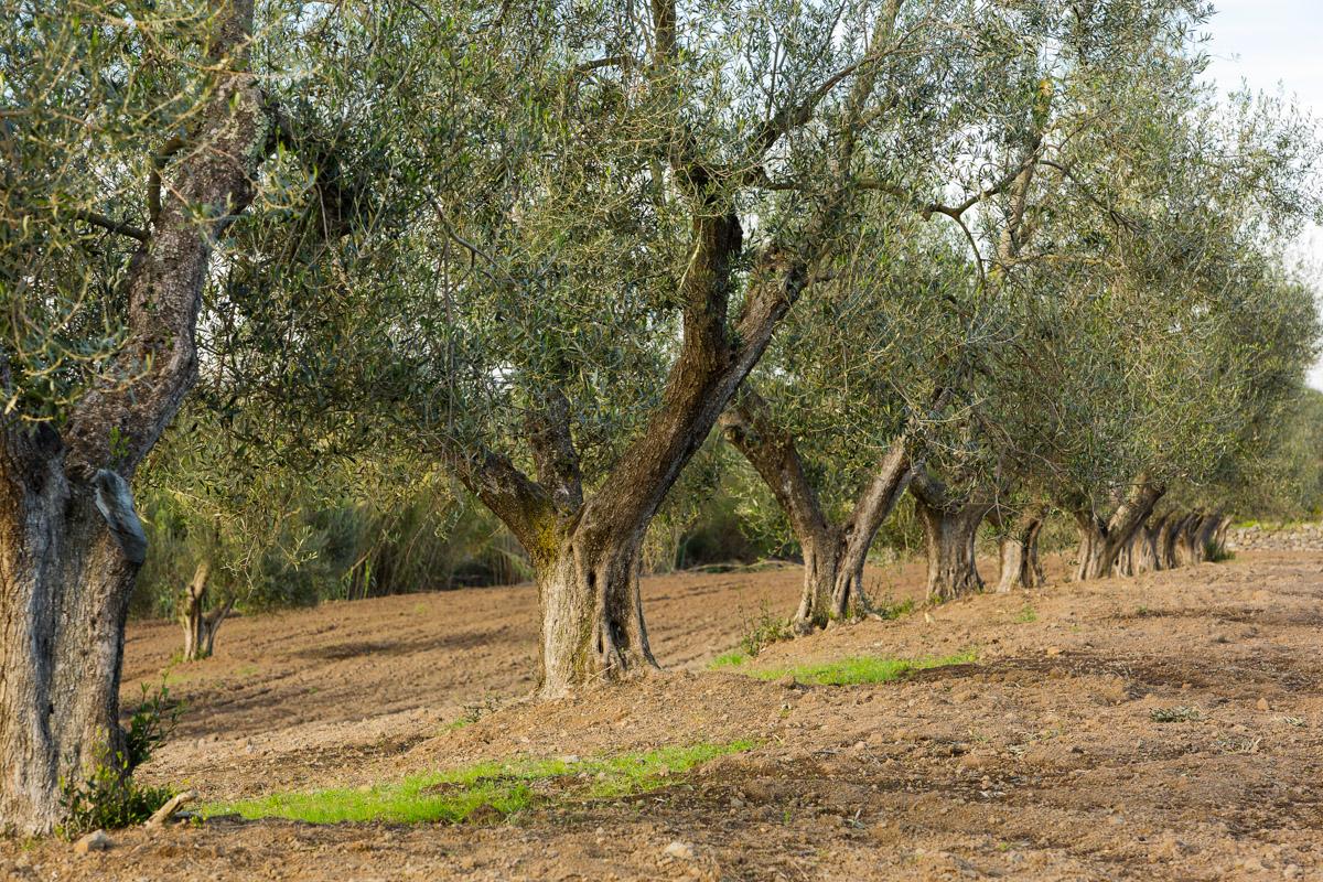20121109_Caponetti_101-Edit