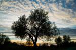 20121109_Caponetti_163_PS