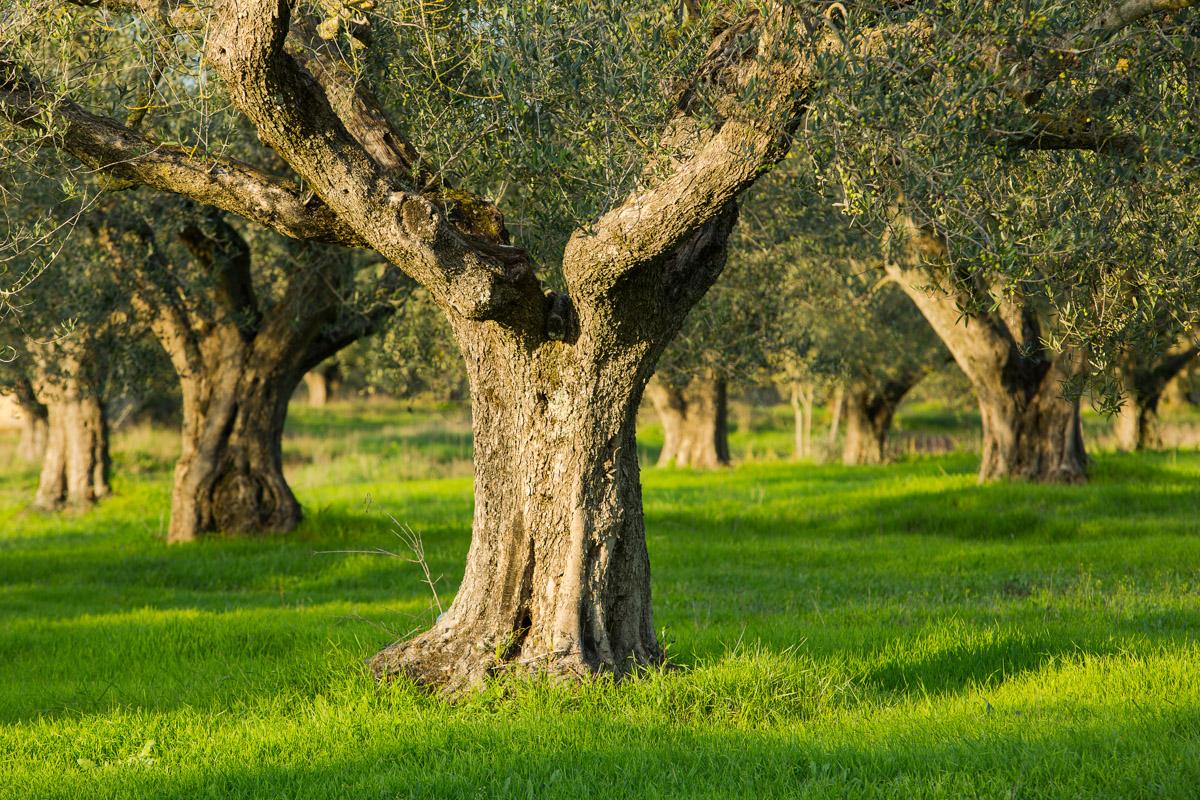 20121114_Caponetti_225-Edit