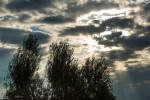 20121115_Caponetti_042-Edit