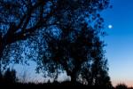 20121116_Tuscania_194_PS