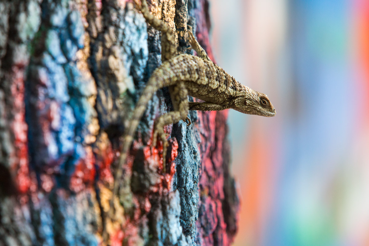A lizard clings to a tree at Graffiti Park at Castle Hill in Austin, Tx.