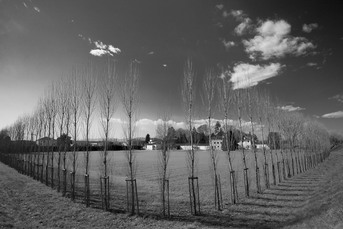 Trees in the Veneto region of Italy.