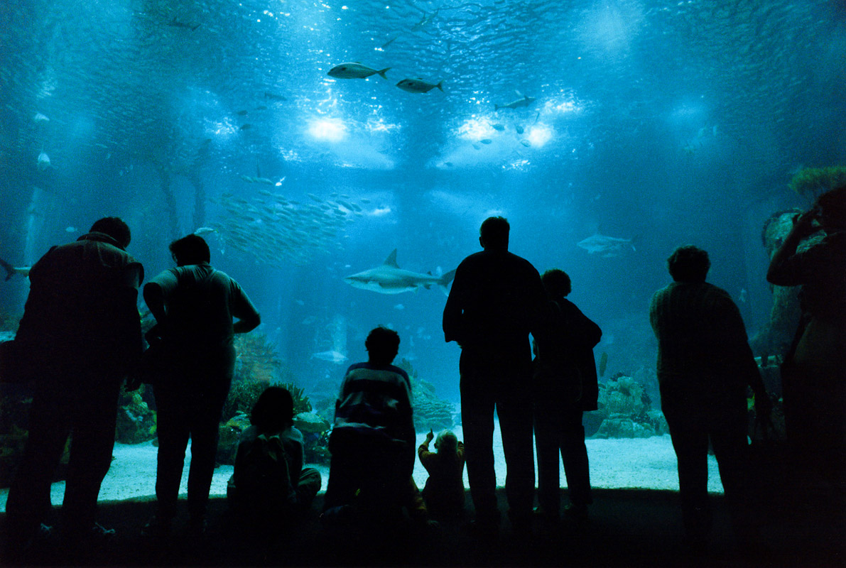 The Lisbon Oceanarium in Lisbon, Portugal.