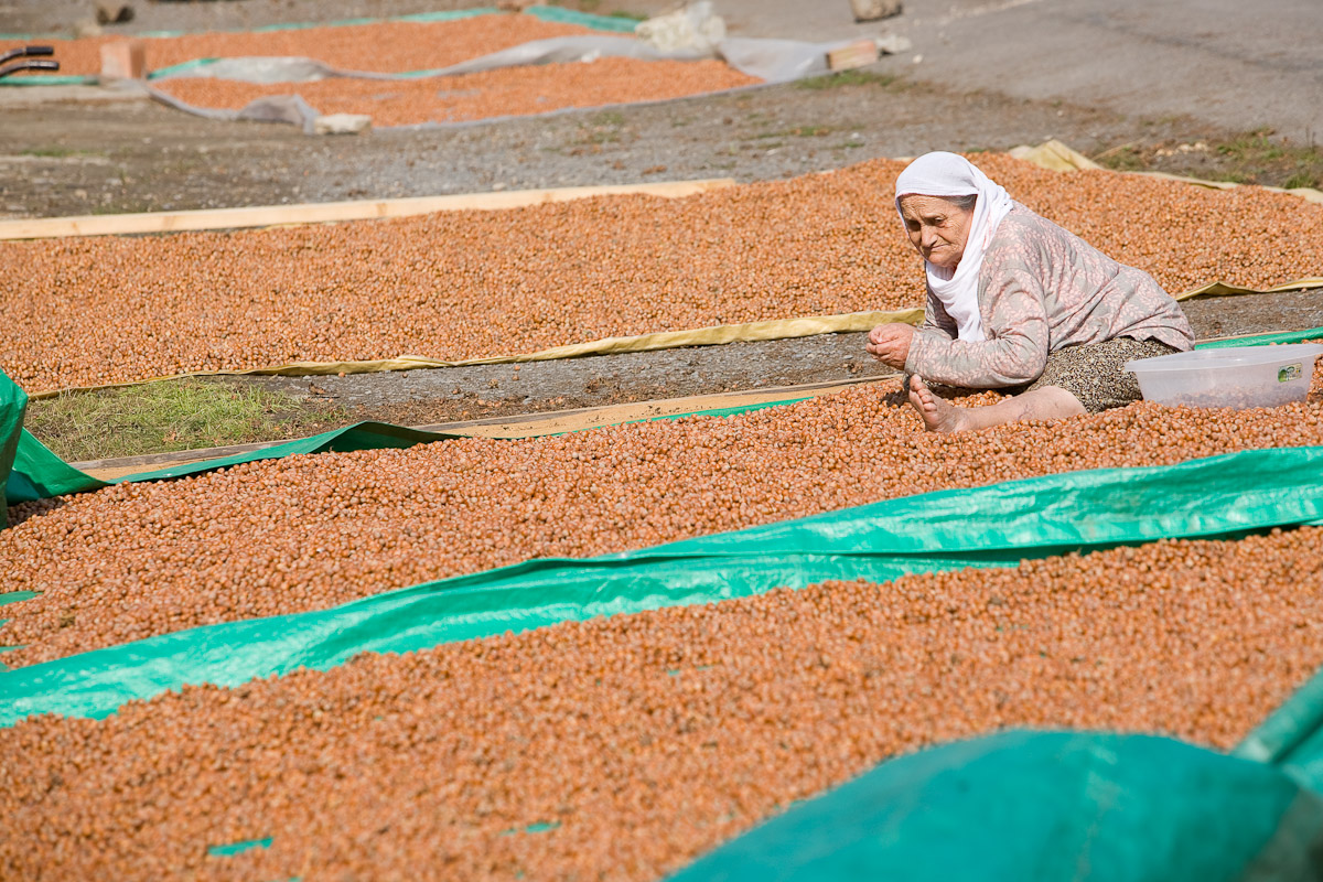 A farmer sorts hazelnuts alongside a road outside of Trabzon, Turkey.