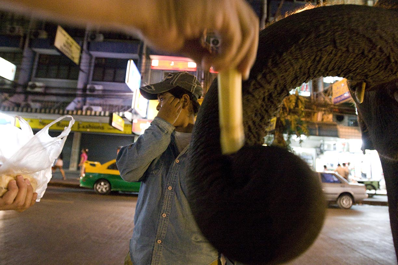 Mahout Ooau looks off as a customer feeds sugarcane to elephant Boopae in the Sukhumvit tourist area of Bangkok.