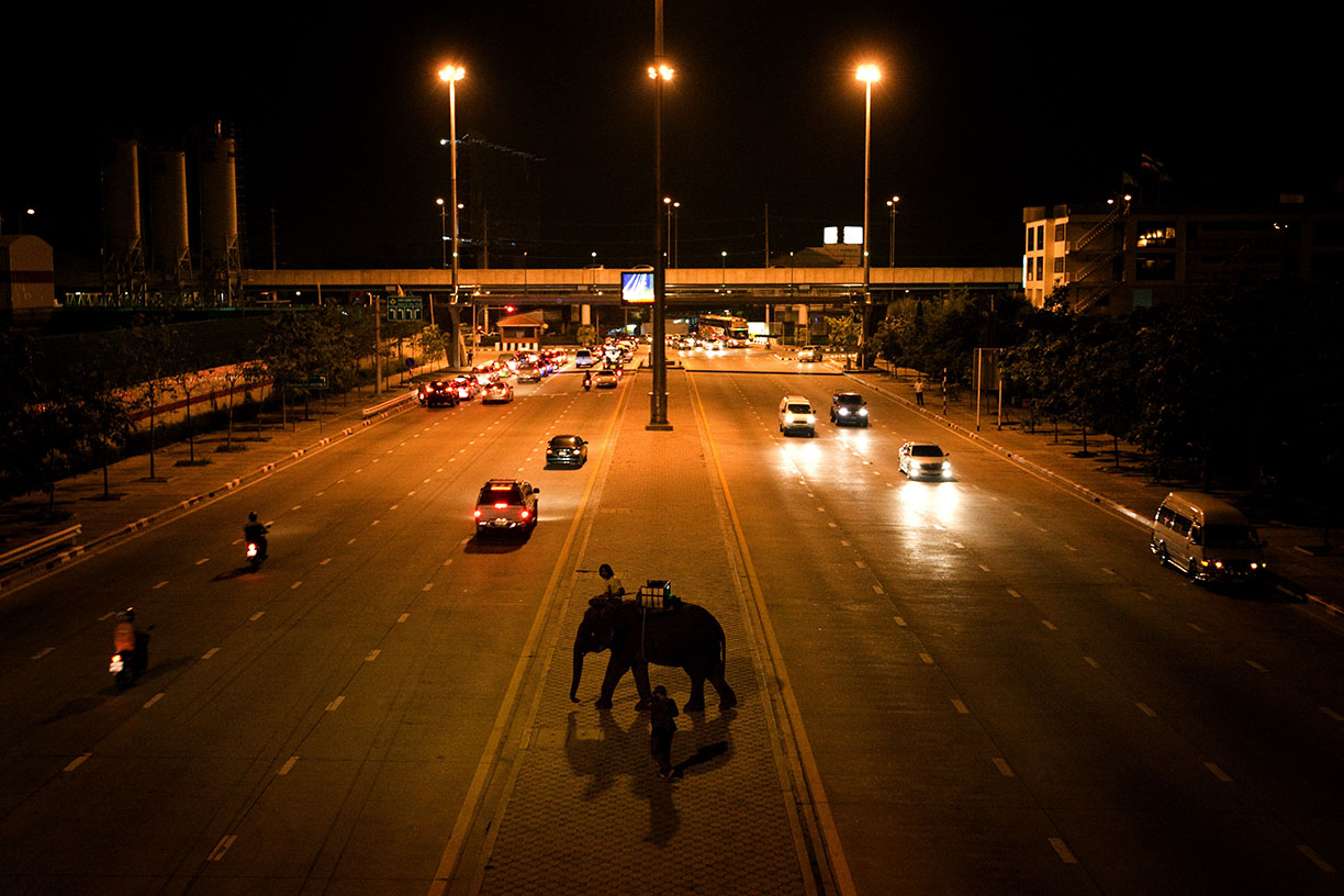 A mahout and his elephant wait stranded on the centre median of a main road in Bangkok.