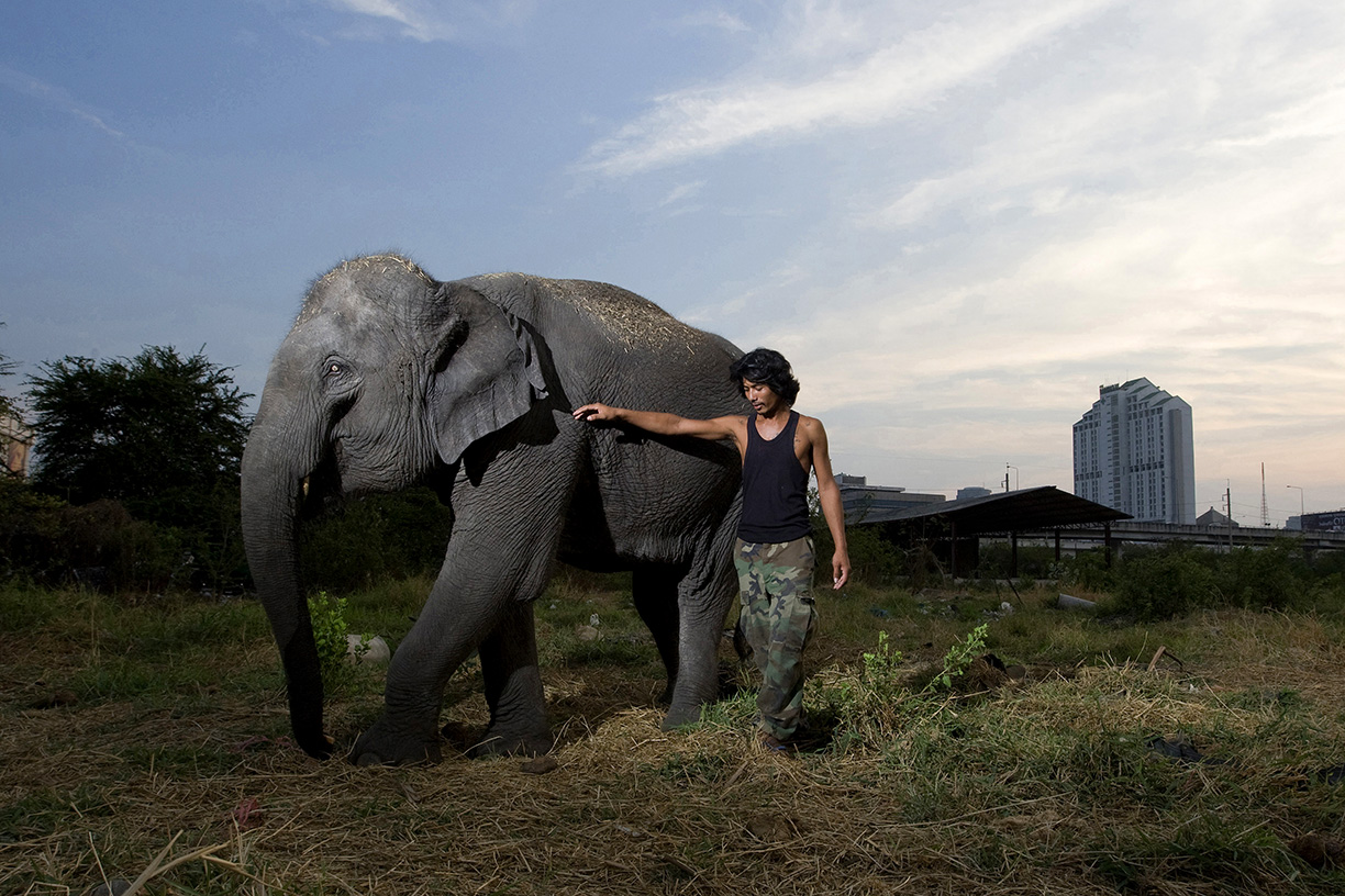 Mahout Wan poses with elephant Boopae near a temporary camp in Bangkok.