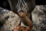 Mahout Bang decorates elephant Gamlai before heading off for a night of work on Bangkok's streets.