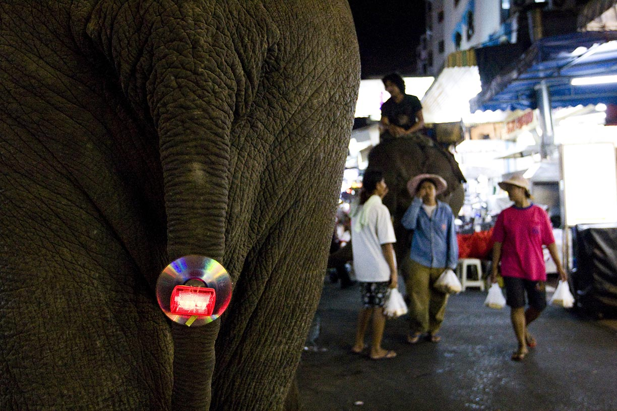 A reflector used for traffic sits fastened to elephant Ma Meio in the Sukhumvit tourist area in Bangkok.