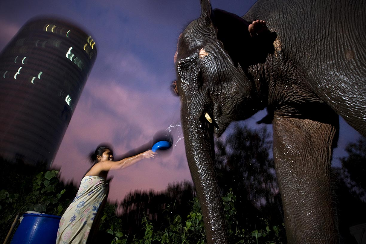 Mahout Ooae washes elephant Boopae before heading off to work the streets of Bangkok.