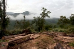 Logs wait to be picked up by a trucking company in an area near Hongsa in Lao PDR.