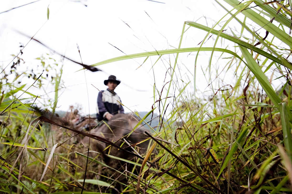 A mahout and his elephant climb a mountain in search of logs in an area near Hongsa in Lao PDR.