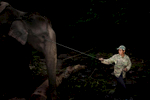 A mahout guides an elephant forward using a string attached to its ear in an area near Hongsa in Lao PDR.
