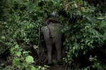 After a log goes missing after rolling down a hill, a mahout and his elephant try to find the missing log in an area near Hongsa in Lao PDR.