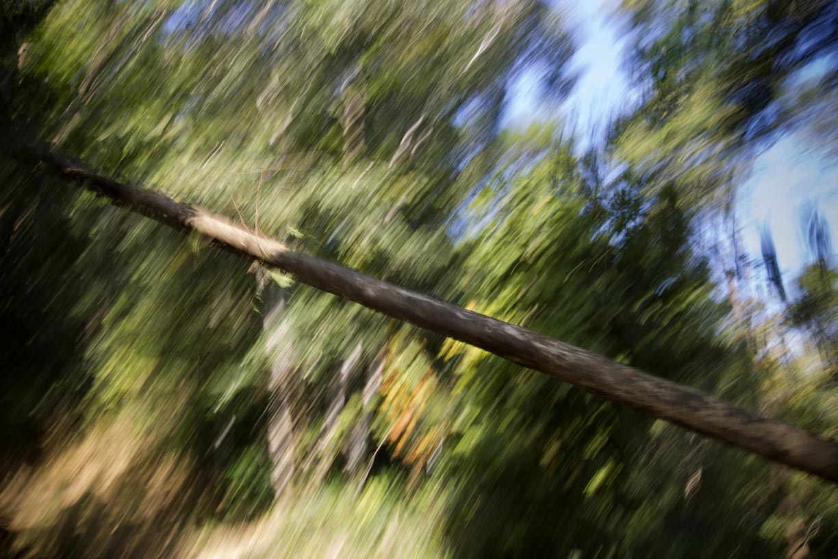 A tree falls in the Yoma mountain range.