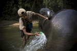 An oozie, or mahout, washes his elephant in the Yoma mountain range.