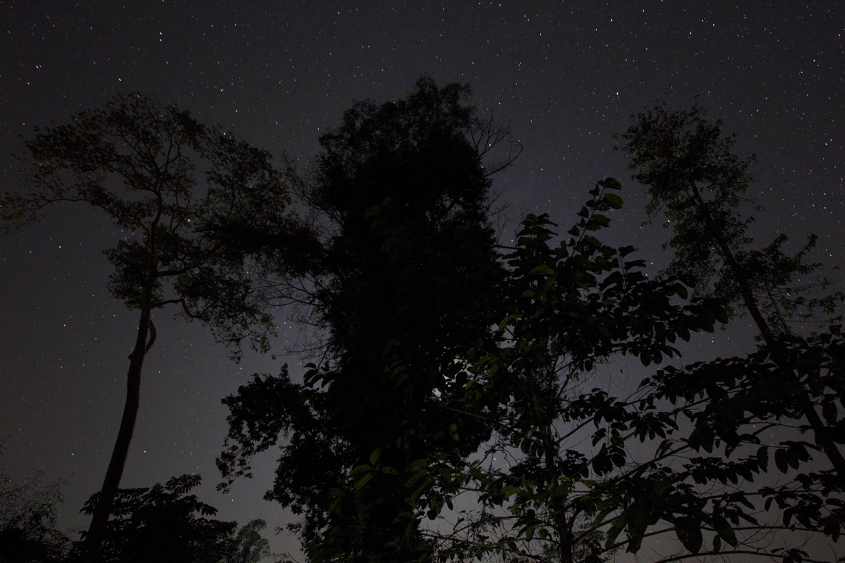 Trees stand among the stars in the Yoma mountain range.