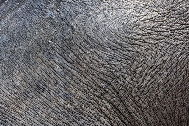 Street elephant, Mongkun.