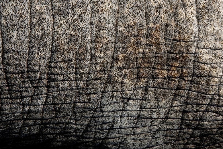Street elephant, Soi.