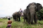 Mahouts greet their elephants in the morning at an abandoned housing development in Bang Bua Thong, Thailand.