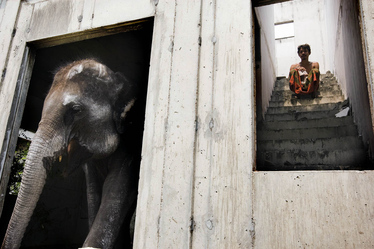 Mahout Wan, poses with his elephant Cola at an abandoned housing development in Bang Bua Thong, Thailand.
