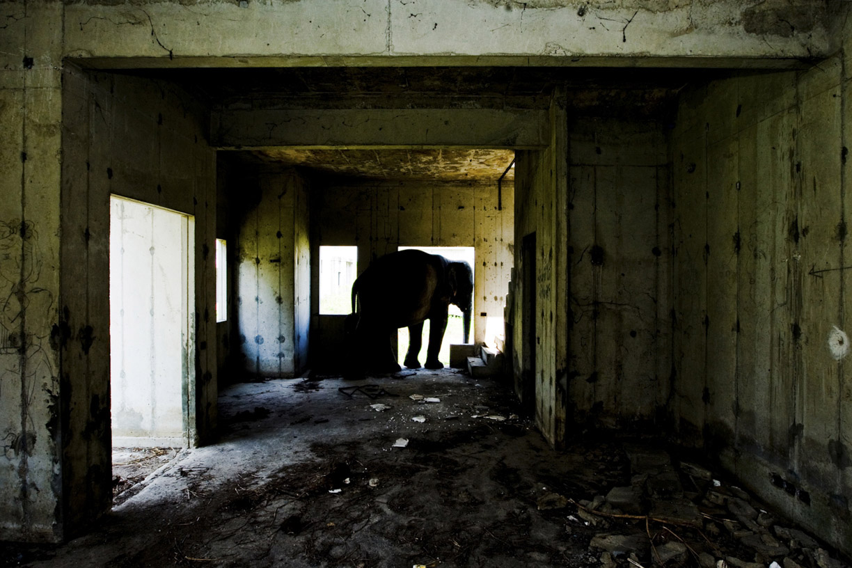 An elephant takes refuge from the sun inside a room at an abandoned housing development in Bang Bua Thong, Thailand.