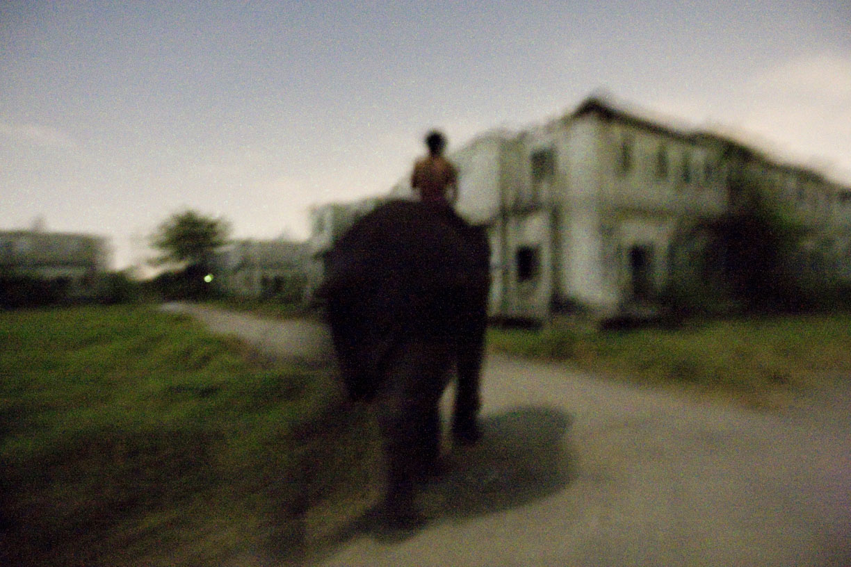 A mahout leads his elephant to a sleeping area at an abandoned housing development in Bang Bua Thong, Thailand.