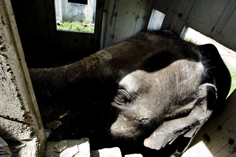 An elephant roams inside a room at an abandoned housing development in Bang Bua Thong, Thailand.
