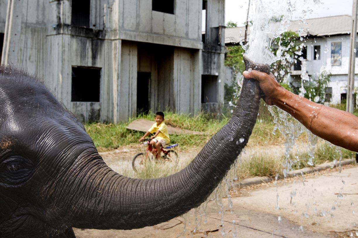An elephant squirts water from its trunk at an abandoned housing development in Bang Bua Thong, Thailand.